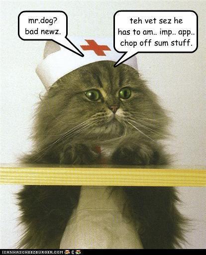 Animal Humor Photo (17386137)