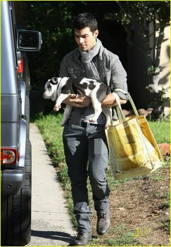 Joe Jonas' कुत्ते का बच्चा, पिल्ला प्यार (November 29).