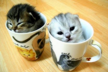 Kittens-in-Cups