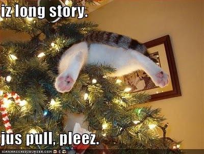 LOL-Christmas-Cat-D-sarahplove-17309466-400-302.jpg