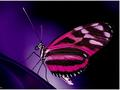 Pink Butterfly - butterflies wallpaper
