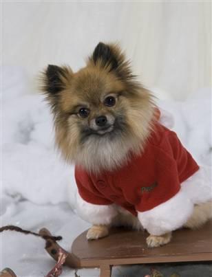Santa Dog <3