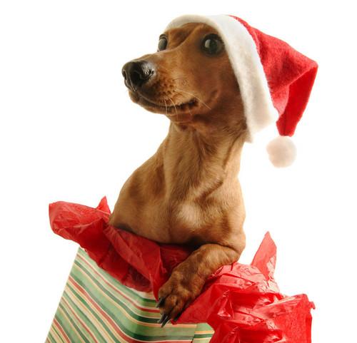 Santa Doggies <3