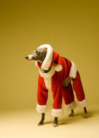Santa Greyhound <3