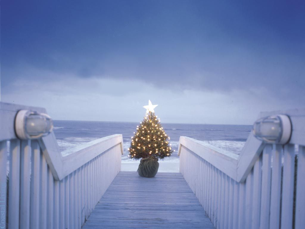 Lonely Christmas.The Lonely Christmas Tree Sarahplove Wallpaper 17309248