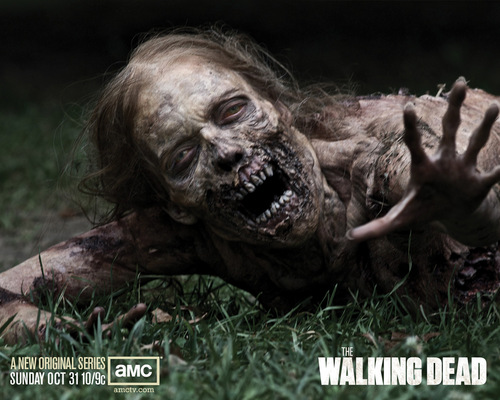 The Walking Dead پیپر وال called The Walking Dead