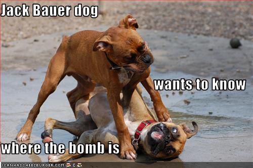 WHERE'S THE BOMB?