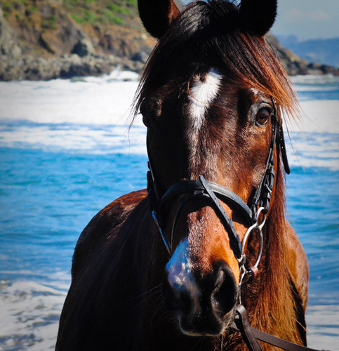 beautiful 马