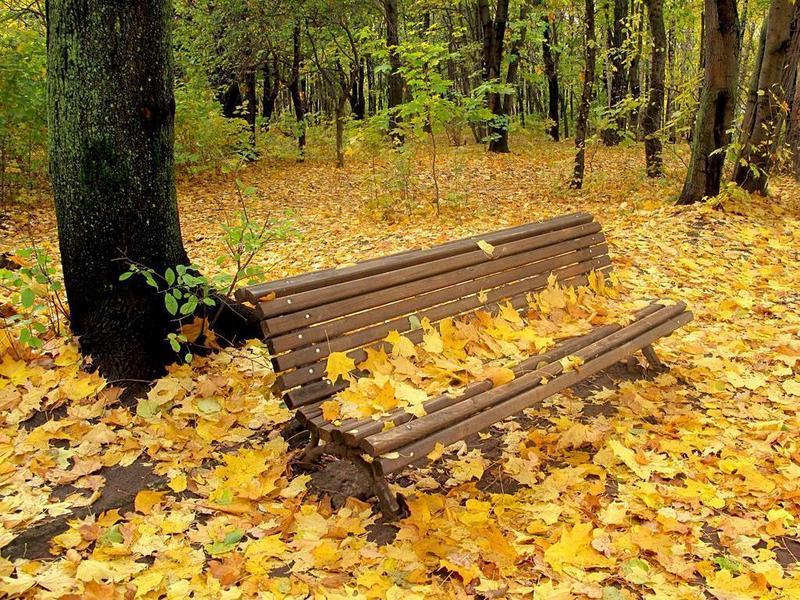 Autumn natures seasons 17473712 800 600 - autumn season