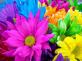Bright colored world - bright-colors photo