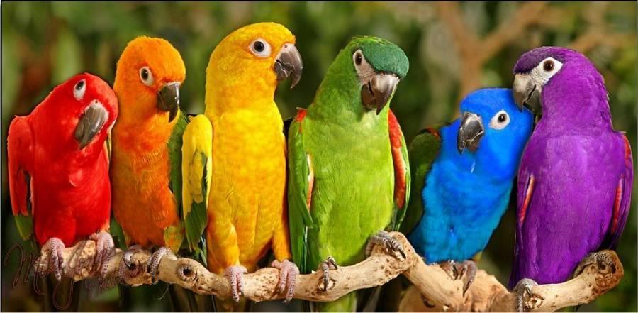 bright colors images bright colored world wallpaper and background