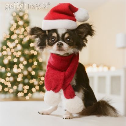 christmas images christmas dog wallpaper and background photos