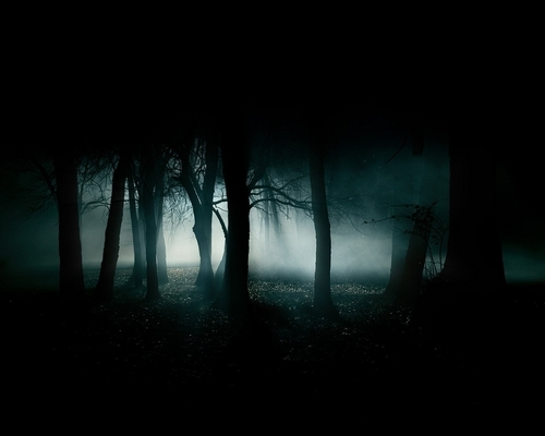 Forest in the dark