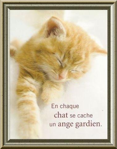 Lovely gatitos