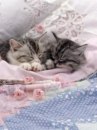 Lovely Kätzchen