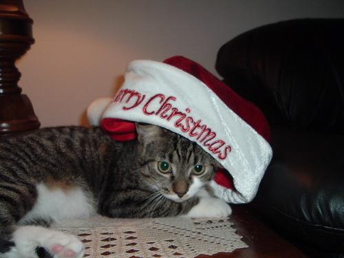 Merry 圣诞节