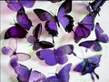 Purple papillons