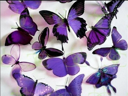 Butterflies Wallpaper Probably With A Rose Called Purple