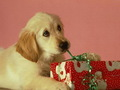 Happy Christmas - dogs wallpaper