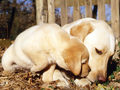 Love - dogs wallpaper