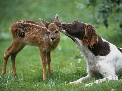 Gentle किस