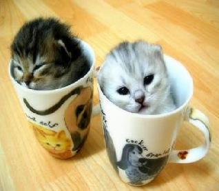 cats in cups