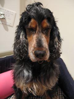 darren hayes 's dog