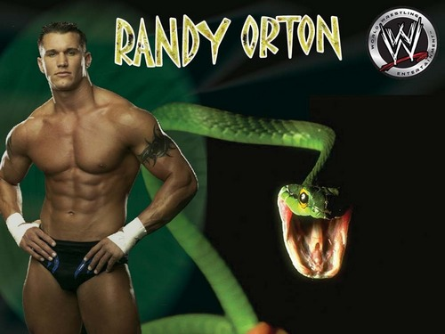 Randy Orton wallpaper called randy orton the viper