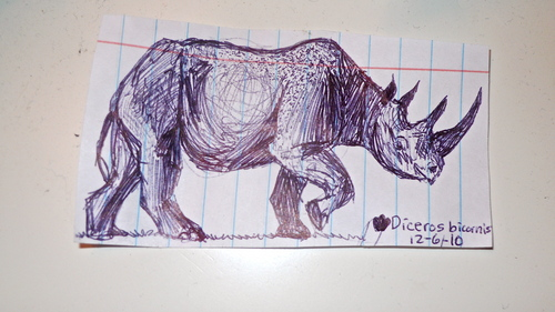 Black Rhinoceros Drawing