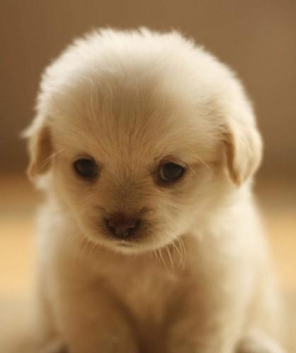 Cute pup :)
