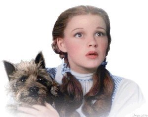 The Wizard of Oz wallpaper possibly containing a cairn titled Dorothy And Toto