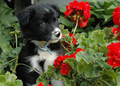 God's pets and flowers <3 - god-the-creator photo
