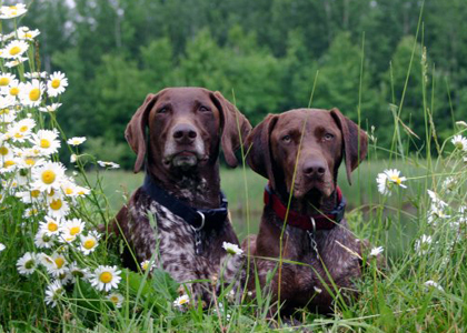 God's pets and flowers <3