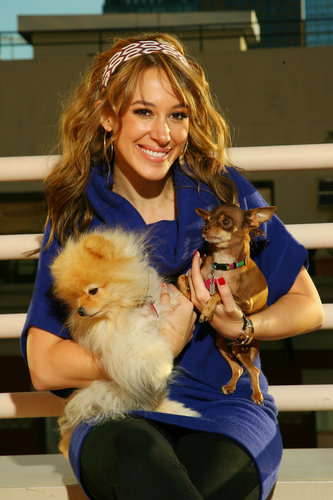 Haylie Duff wallpaper possibly containing a pomeranian, pomerânia entitled Haylie fotografia