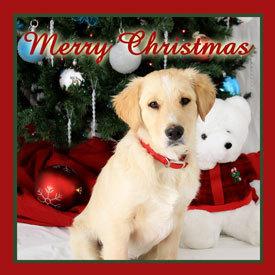 Merry 圣诞节 Berni :)