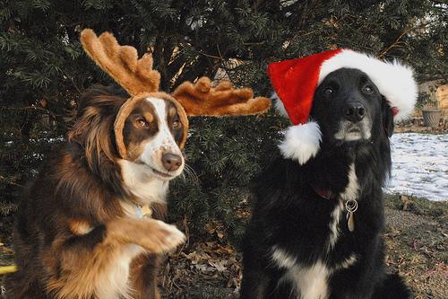 Merry 圣诞节 Berni :*