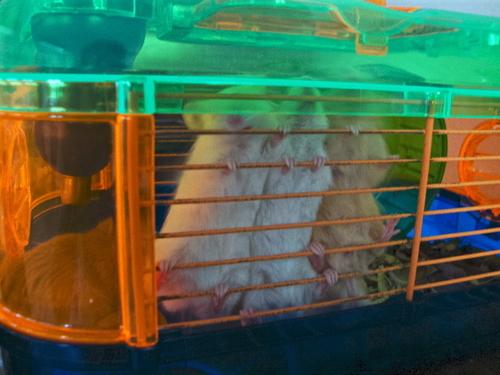 Mice :)