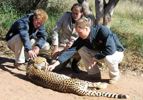 Prince William and Prince Harry at the Mokolodi Education Centre
