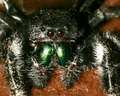 SPIDERS - eight-legged-freaks photo
