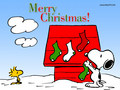 Snoopy Christmas - teddybear64 wallpaper