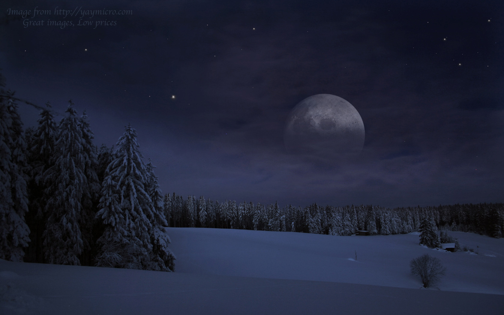 Snowflake Pack images Winter forest at night HD wallpaper ...