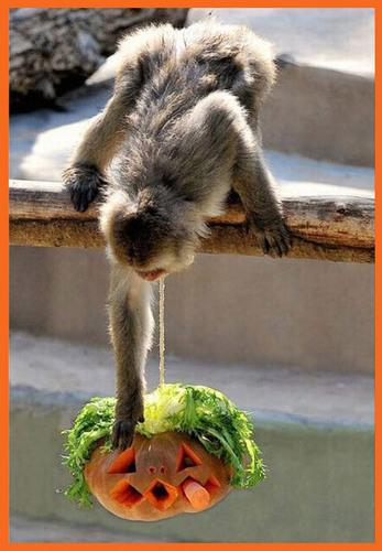 Животные Любовь pumpkins!
