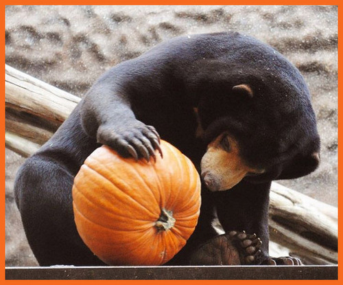 Animals love pumpkins!