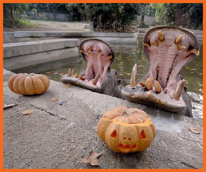 Animals love pumpkins!