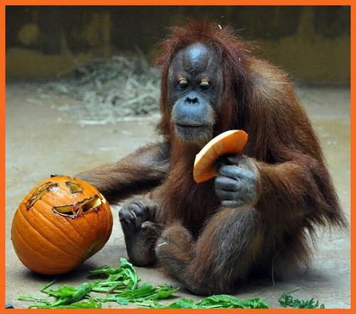 animais amor pumpkins!