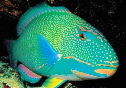 Bright Colored ikan