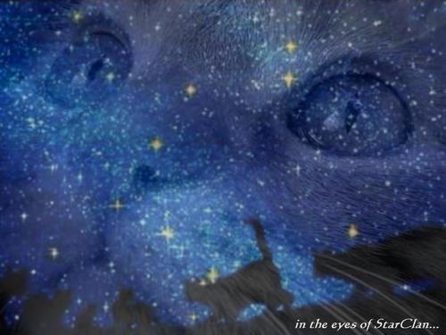 In The Eyes of Starclan