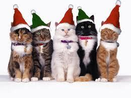 MERRY navidad FROM THE WARRIOR gatos