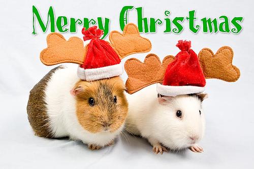Merry navidad dear Berni :*