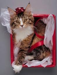 Merry Рождество dear Berni :*